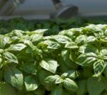 Plan Your Herb Garden Before You Dive In