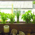 Easy Indoor Herb Garden