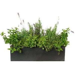Container Garden Herbs for Beginning Gardeners