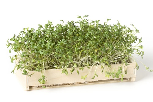 Top Five Proven Herbs for Containers